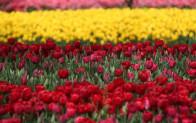 Bursa'da parklara 5 milyon çiçek ekildi