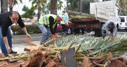 Dev palmiye ağacı dükkanının çatısına devrildi